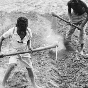 Provide gardening tools