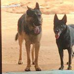 Kazula and Sheba