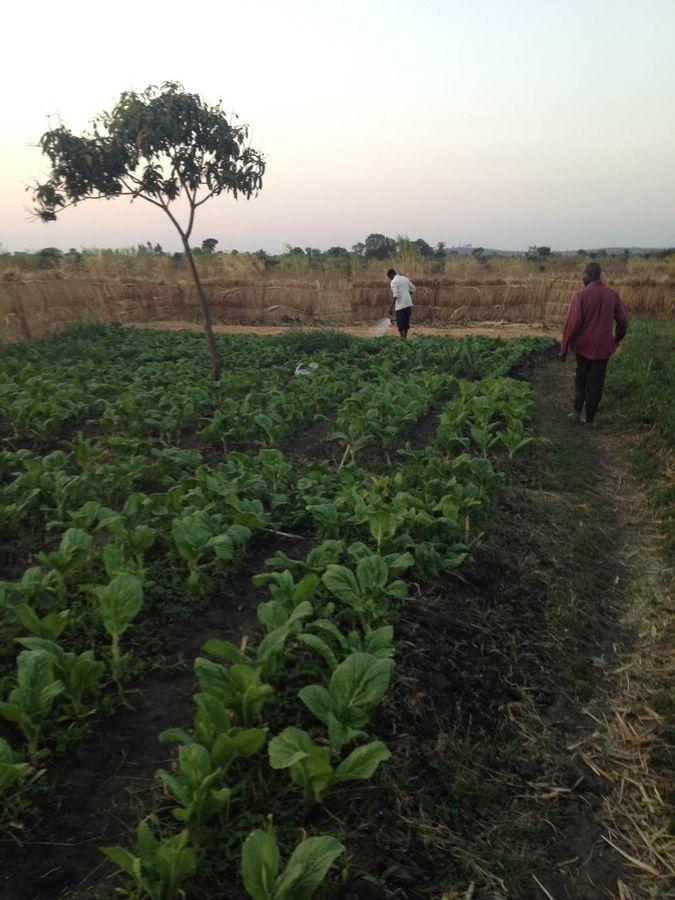HIV+ support vegetable garden