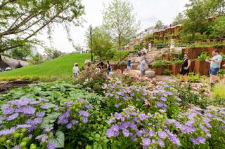 A Photo of rolling hills, purple flowers, layered boulders, and trees all creating a lush park landscape.