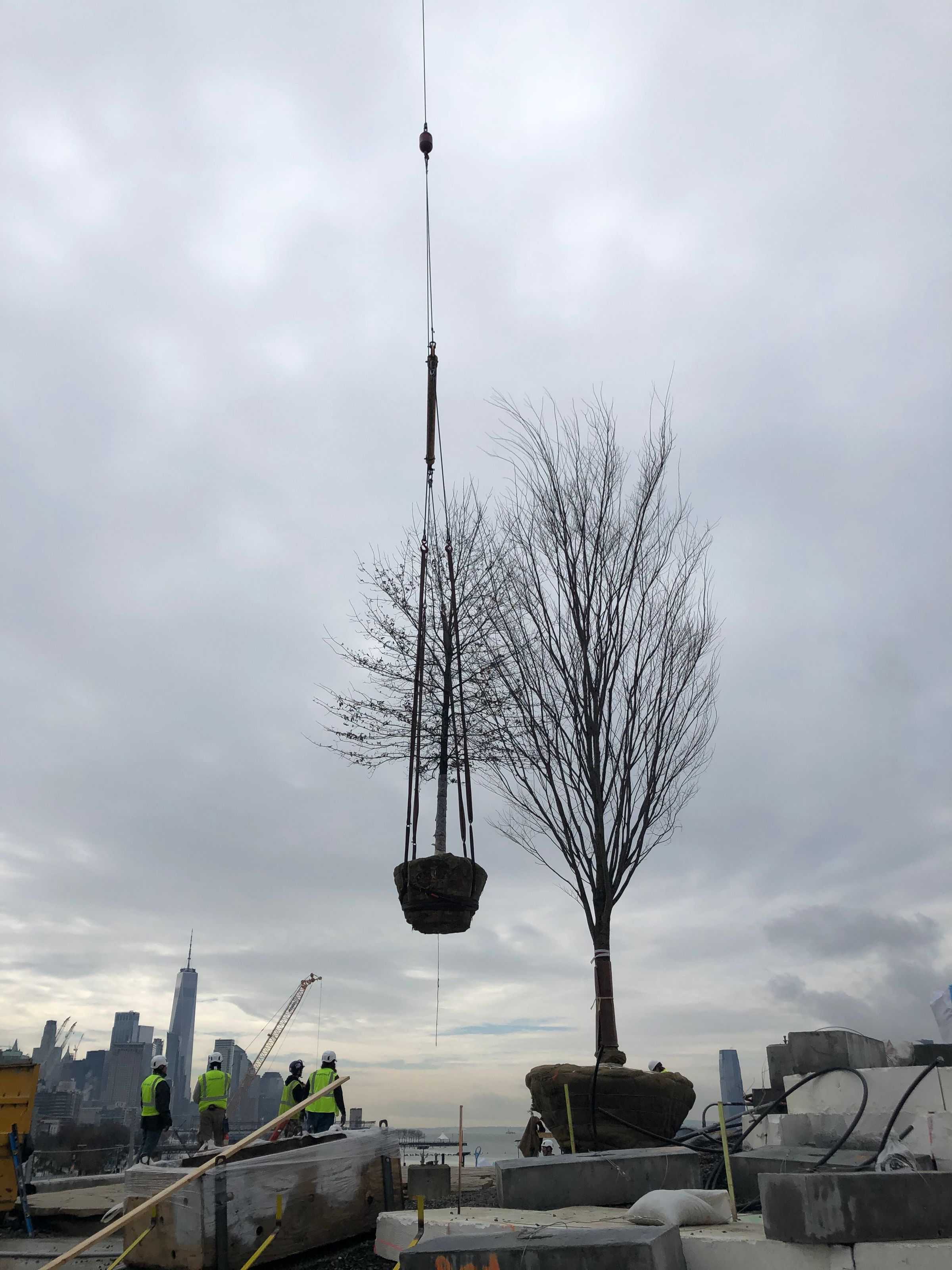 A tree being lifted by a crane.