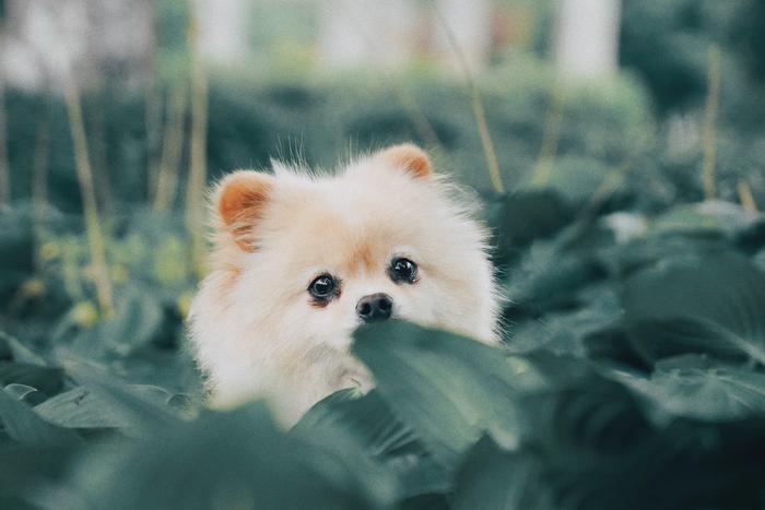 Un chiot au milieu de plantes