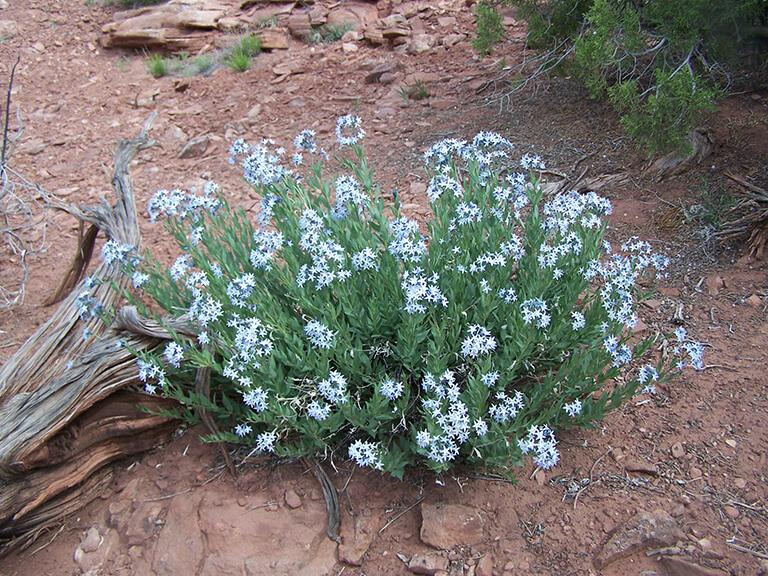 Mesa Land Trust – Three Sisters Trails Biological Surveys