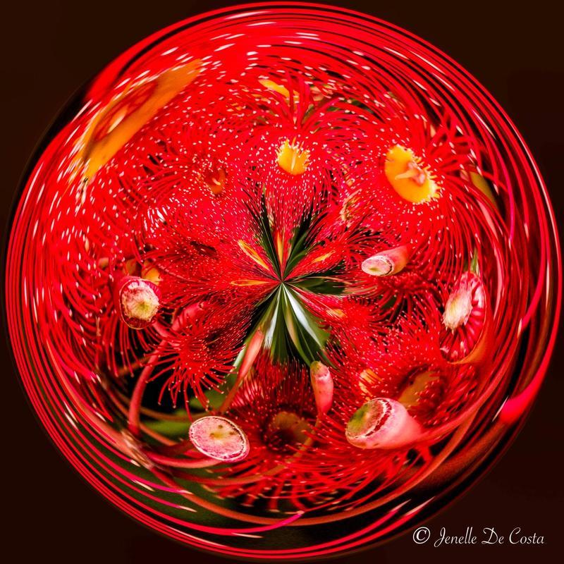 A christmas orb made of gum blossoms.