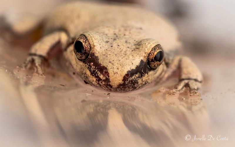 Little frogs in the rain gauge.