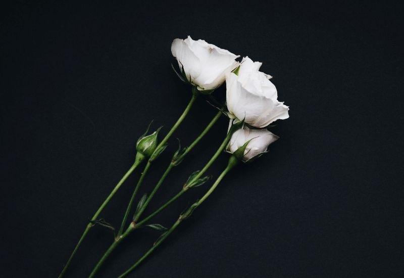 Tre hvite roser. Foto: Colourbox.
