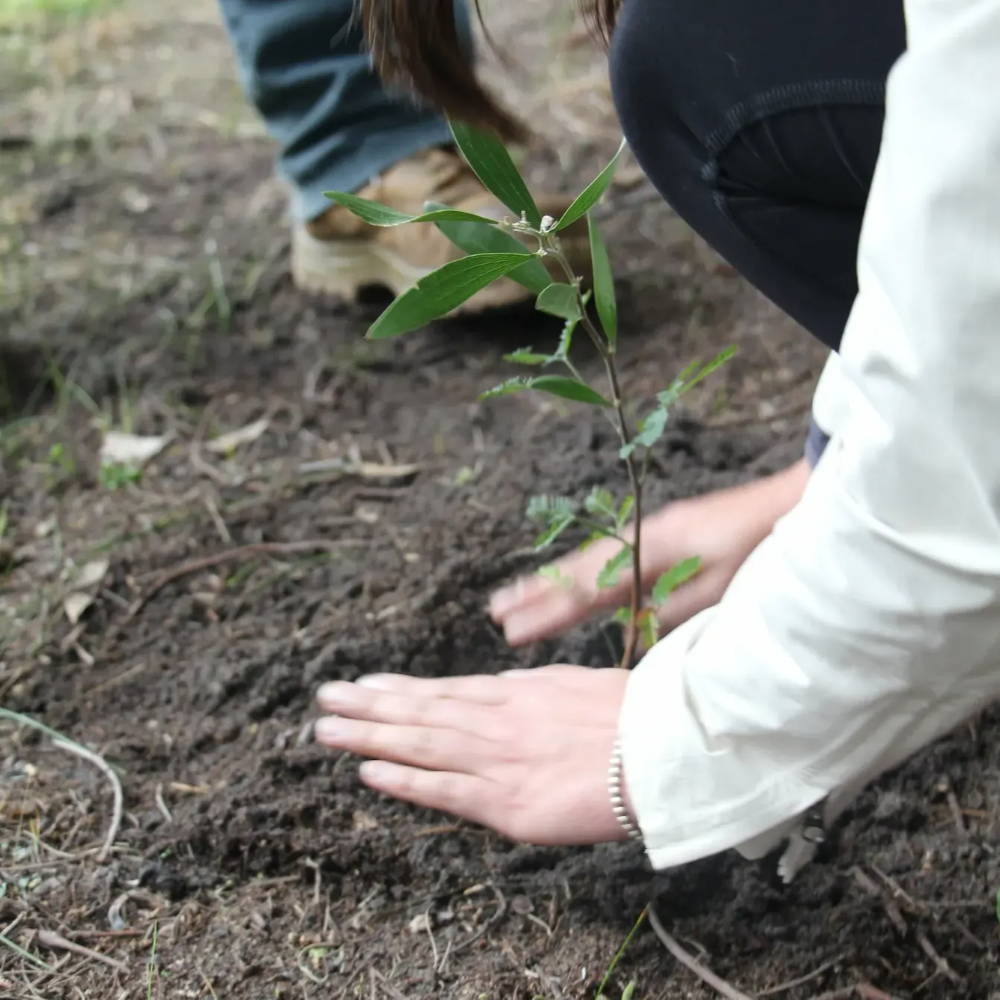 Greenfleet planting trees to offset carbon footprints.