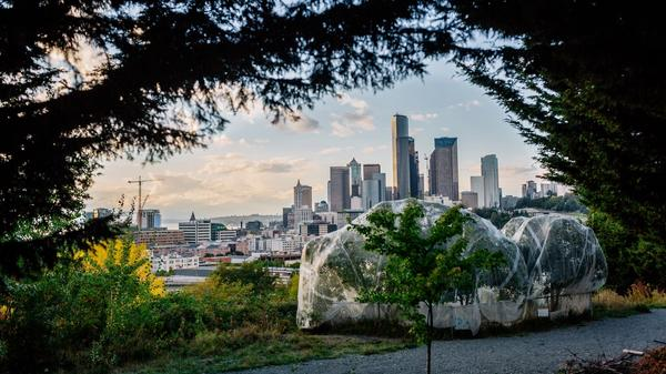 Seattle behind fruit trees