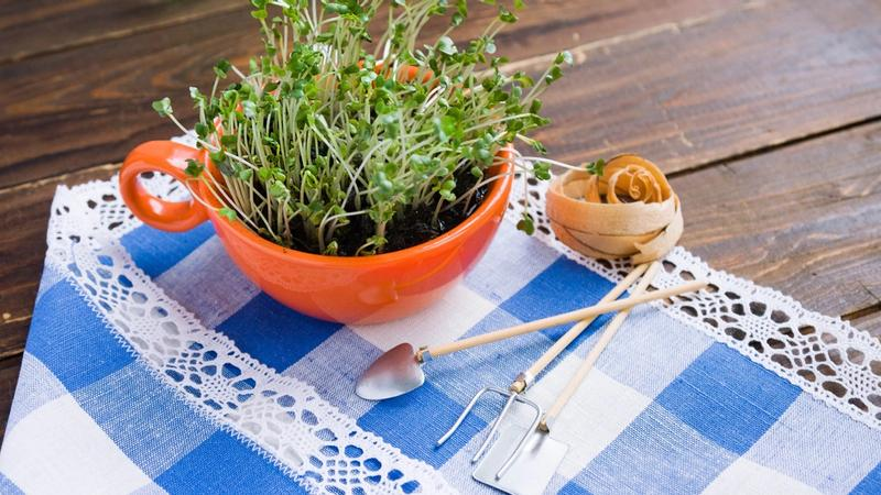 Growing Plants From Scraps