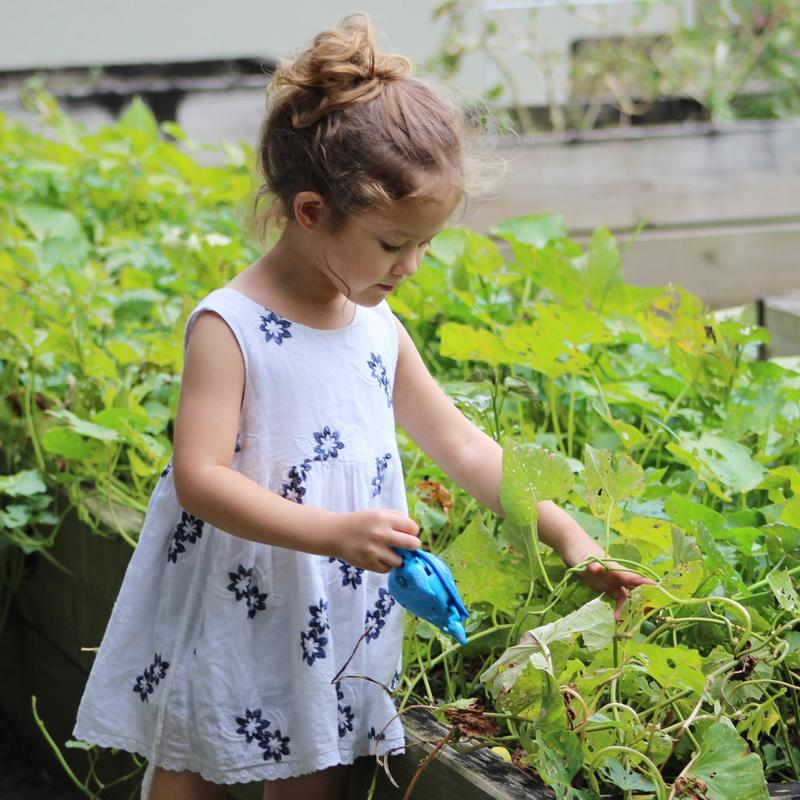 Do Your Little Ones Know How Plants Grow?