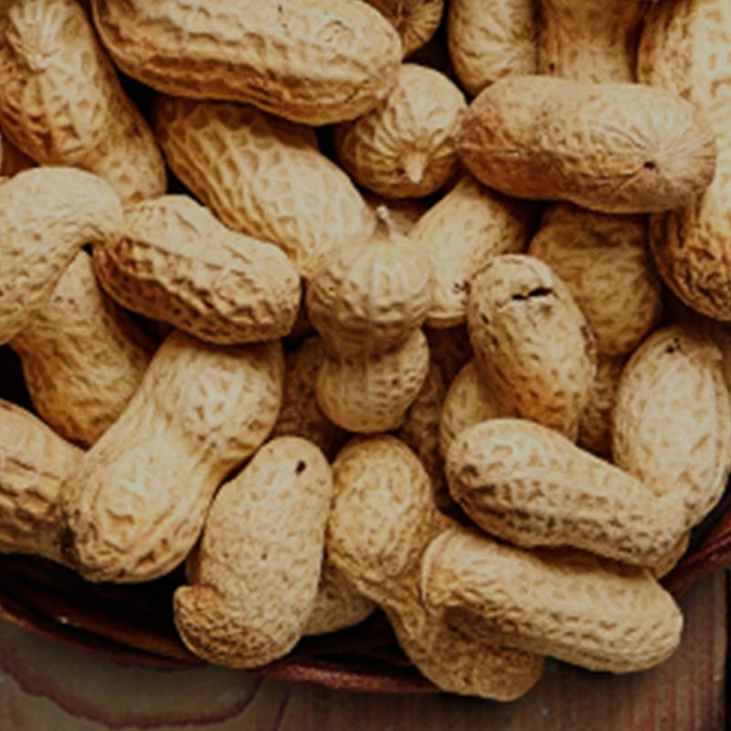 Everything You Need To Know About: Bambara Groundnuts