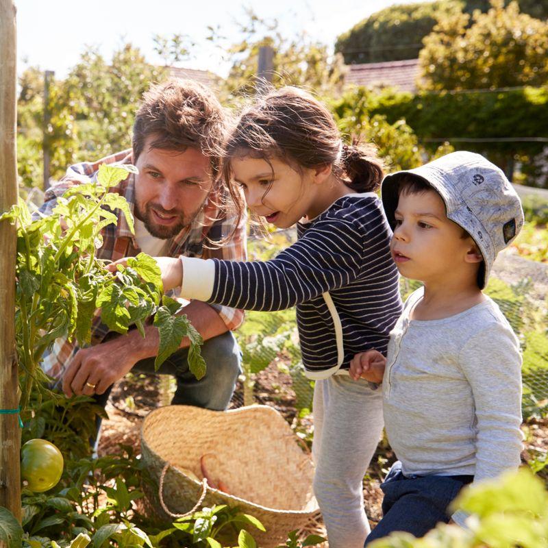 ¿Cómo estamos haciendo que la alimentación sustentable sea una opción accesible para todos?