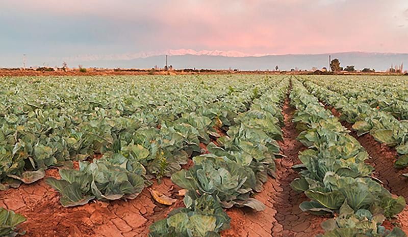 Vegetales sustentables
