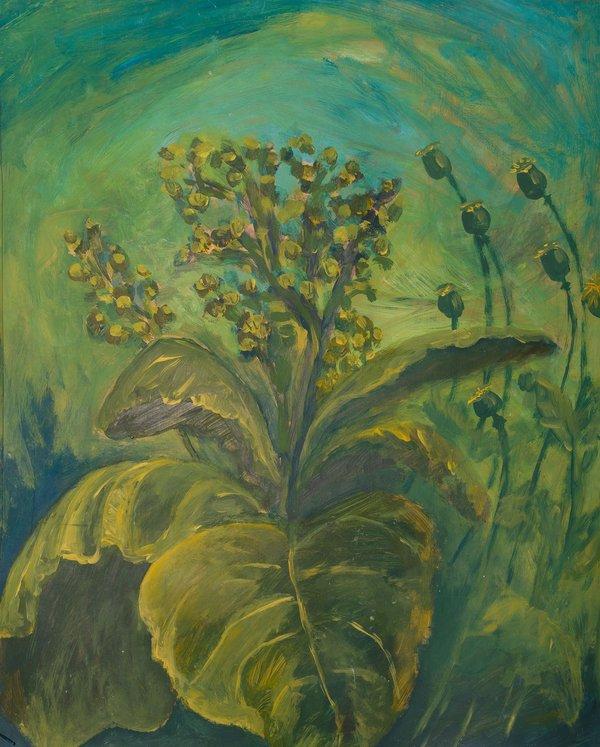 Flowering tobacco | Art Lasovsky