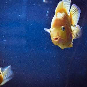 fish swimming