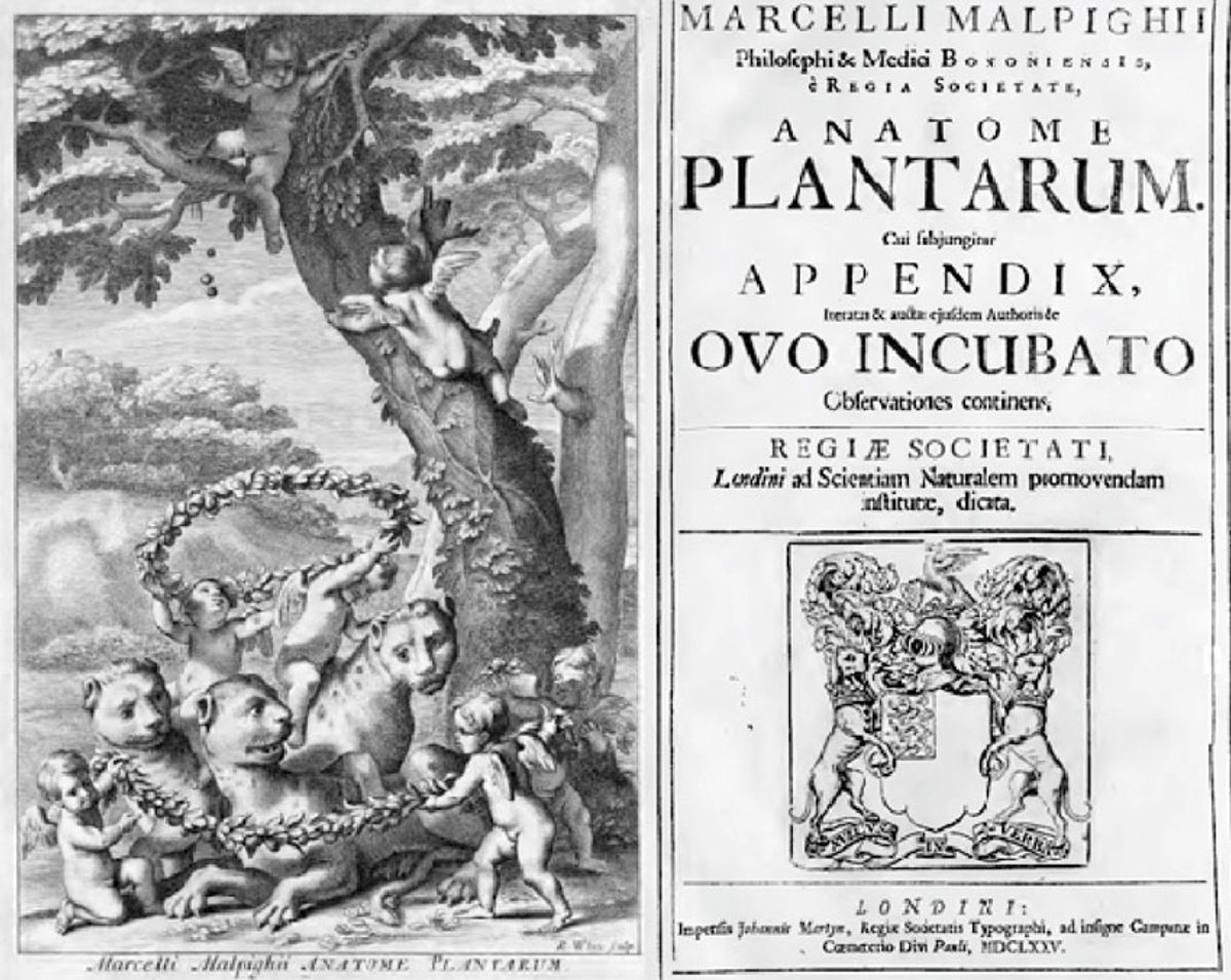 Title page of Anatome Plantarum (1675) written by Marcello Malpighi.
