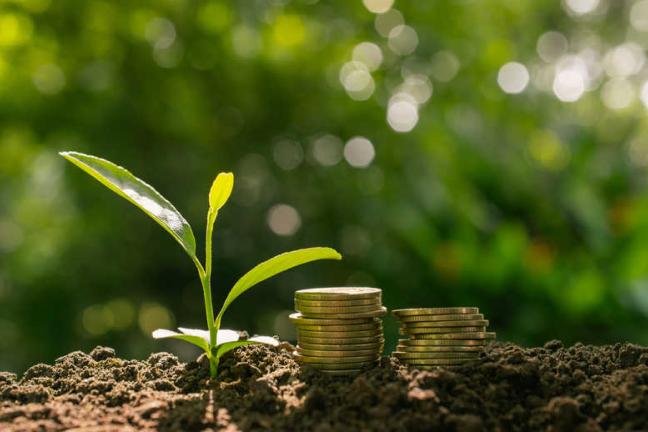 SeedTribe; ethical investment