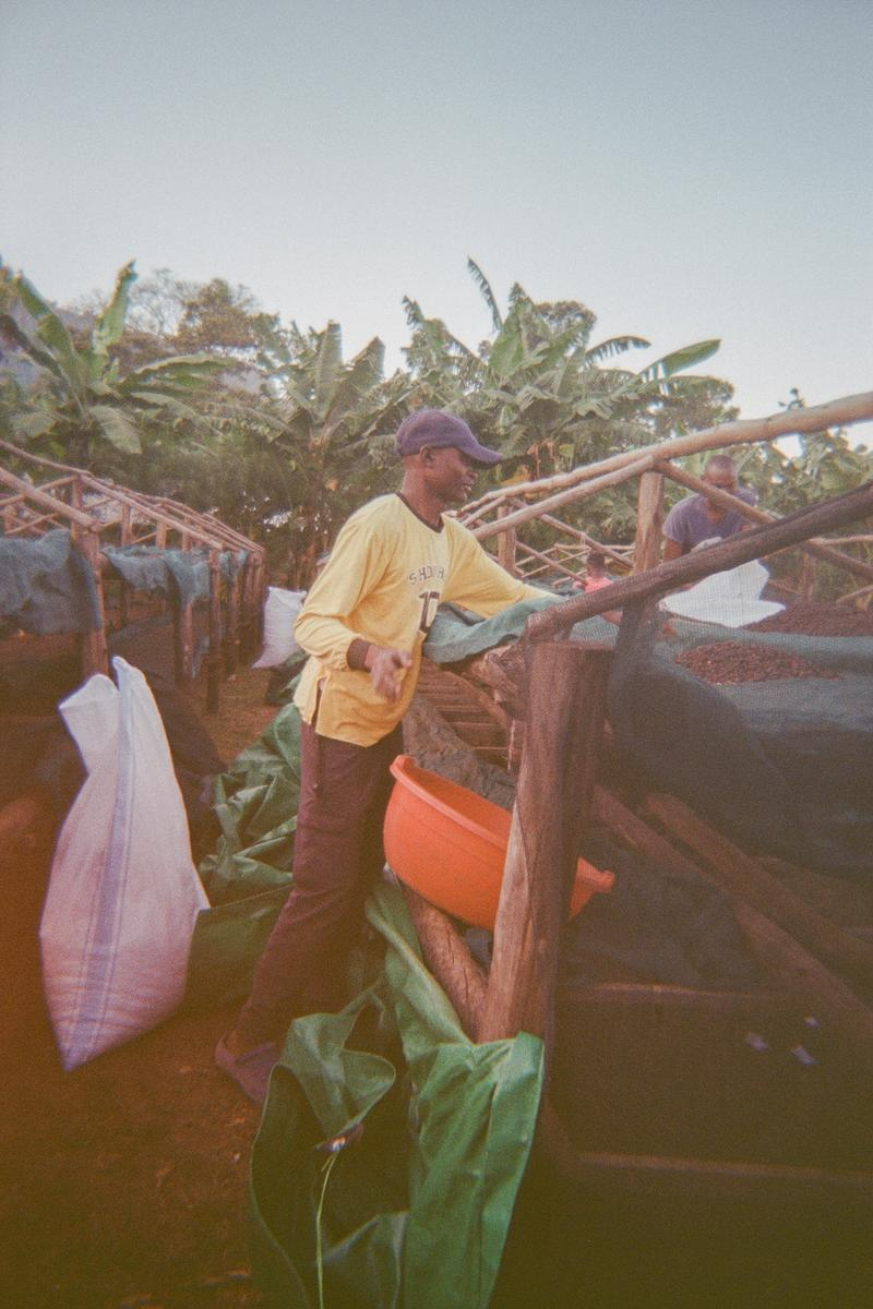 Workers at Muyanda Site packing coffee in the bags for storage.