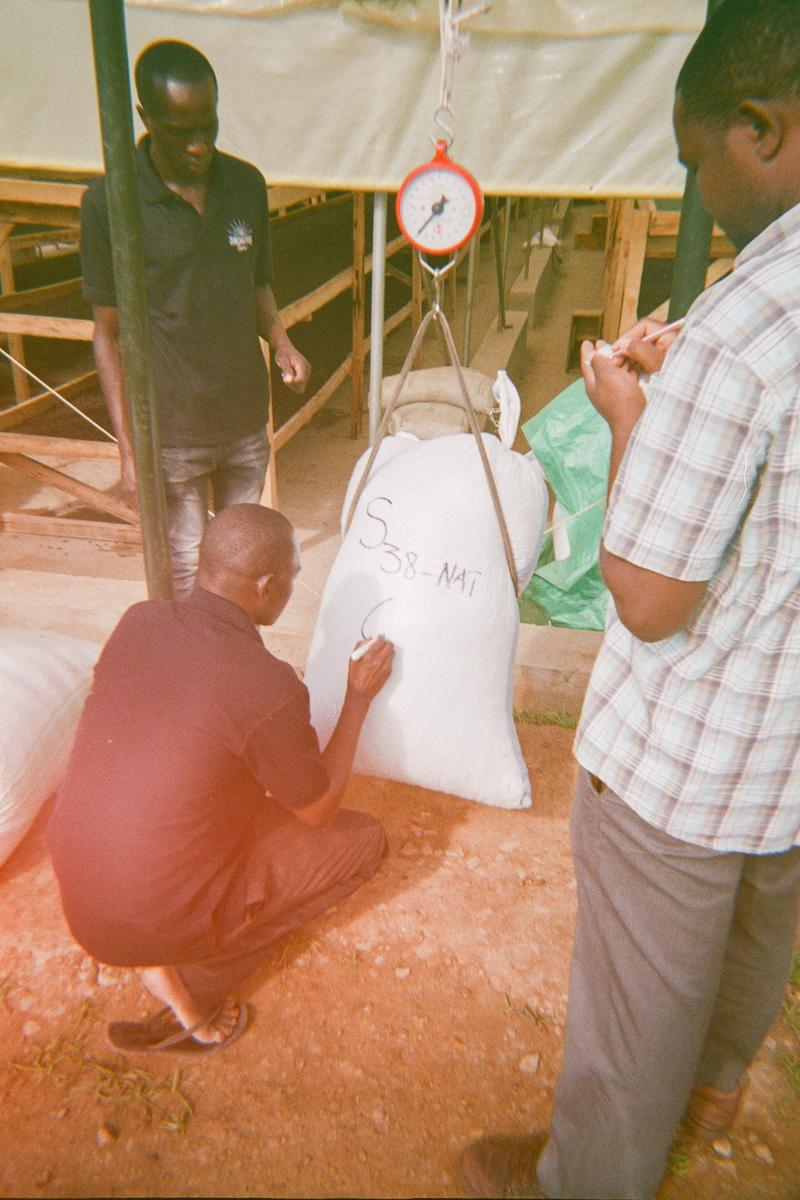 Dry coffee being weighed before going to the store. World Positive Coffee.
