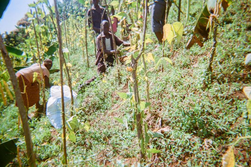It is time for harvesting beans in their garden. To fight poverty in the area.