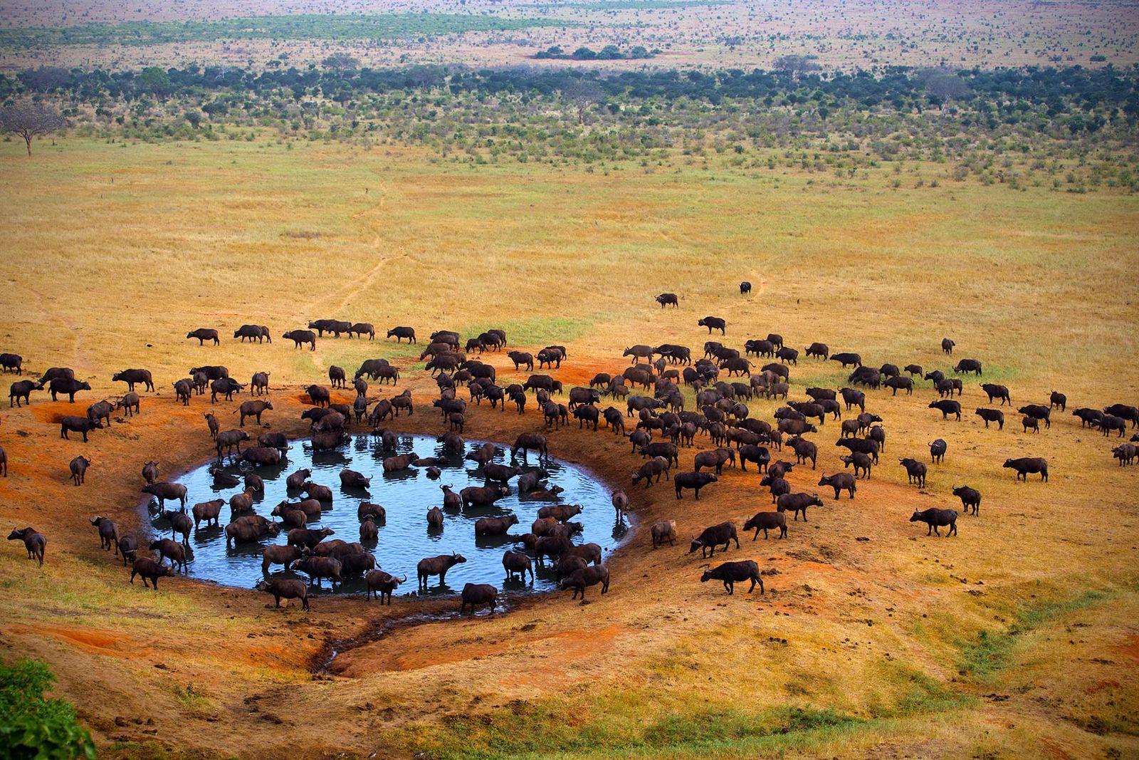 13 DAYS BEST OF KENYA & TANZANIA