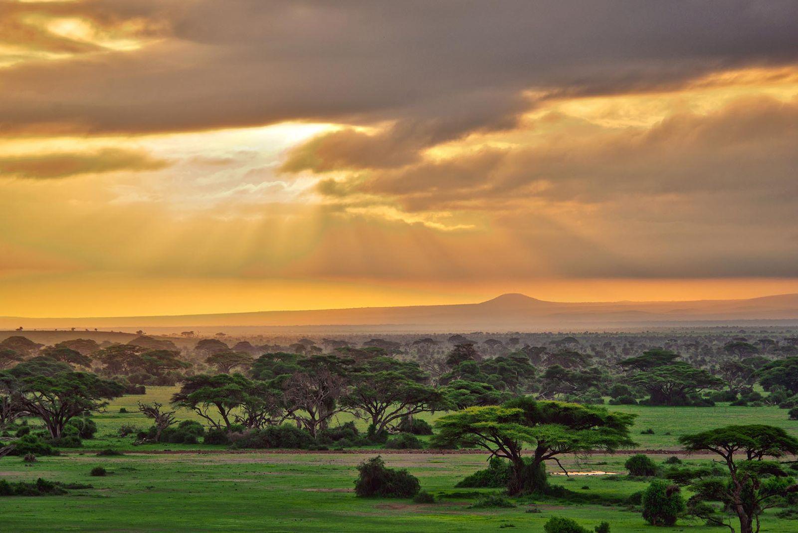 11 DAYS BEST OF KENYA & TANZANIA