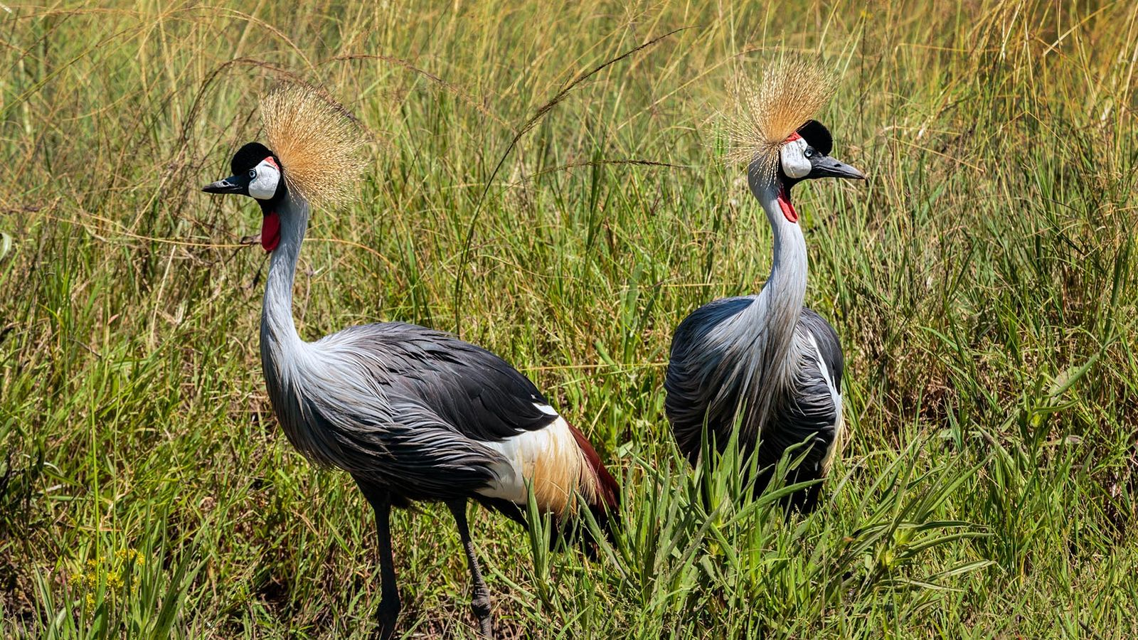 14 DAYS - WONDERS OF UGANDA