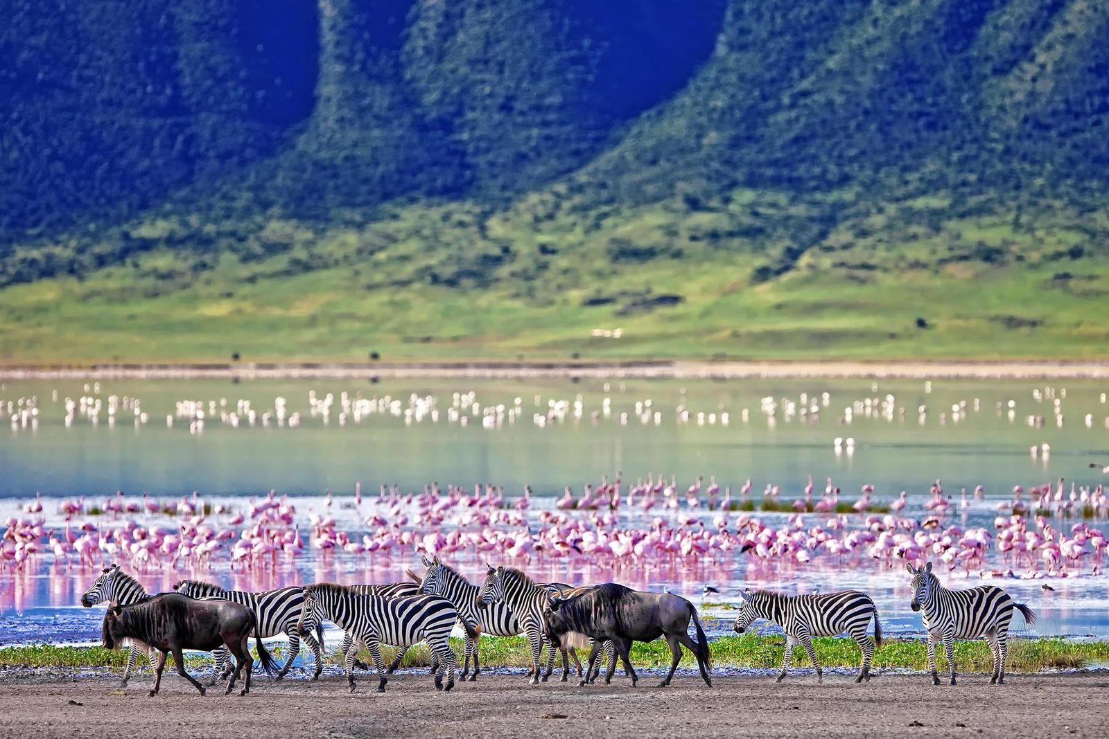 10 DAYS EYES ON KENYA & TANZANIA SAFARI