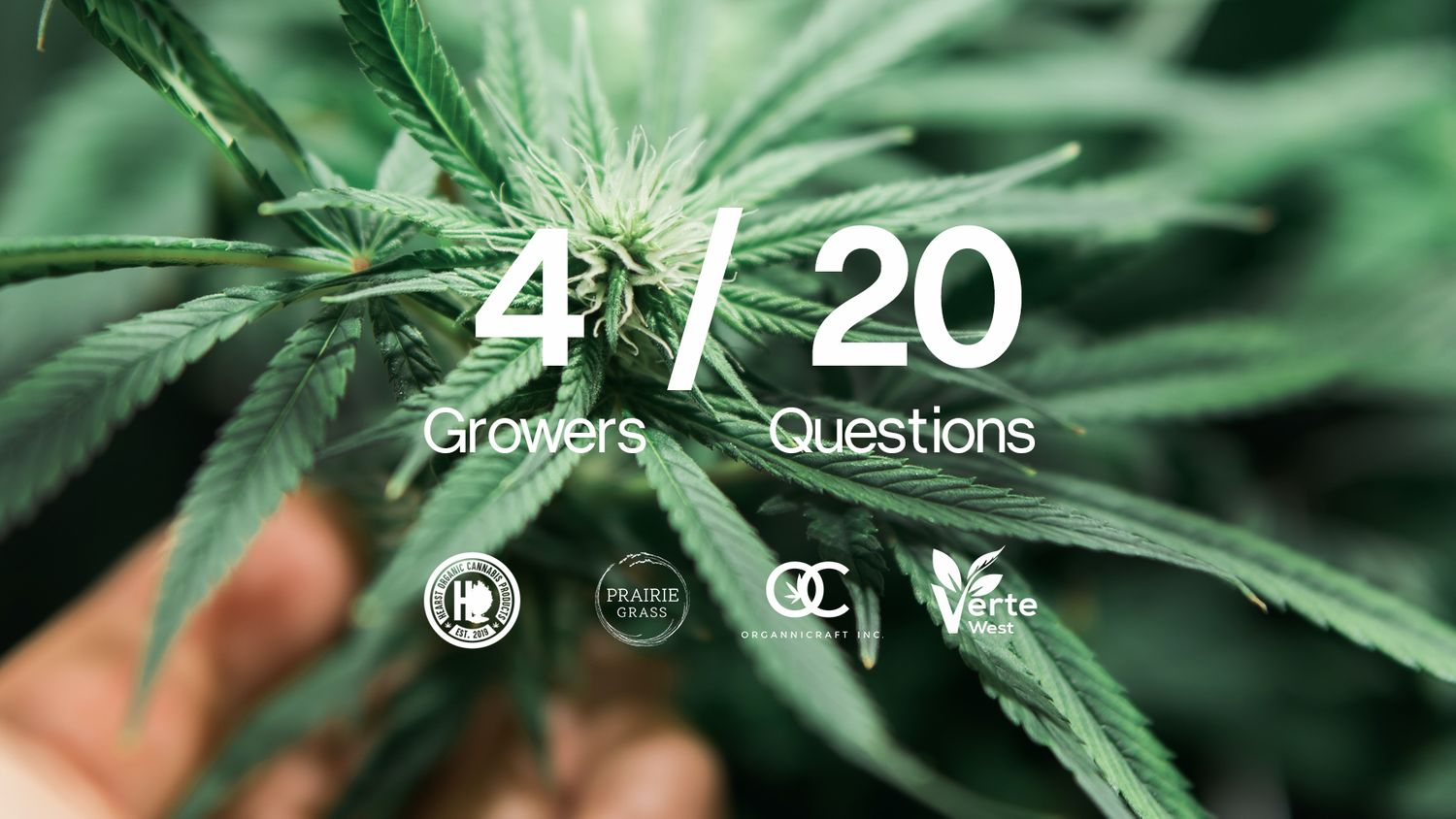 4 in 20: Meet 4 Shelter Craft Collective Growers in 20 questions