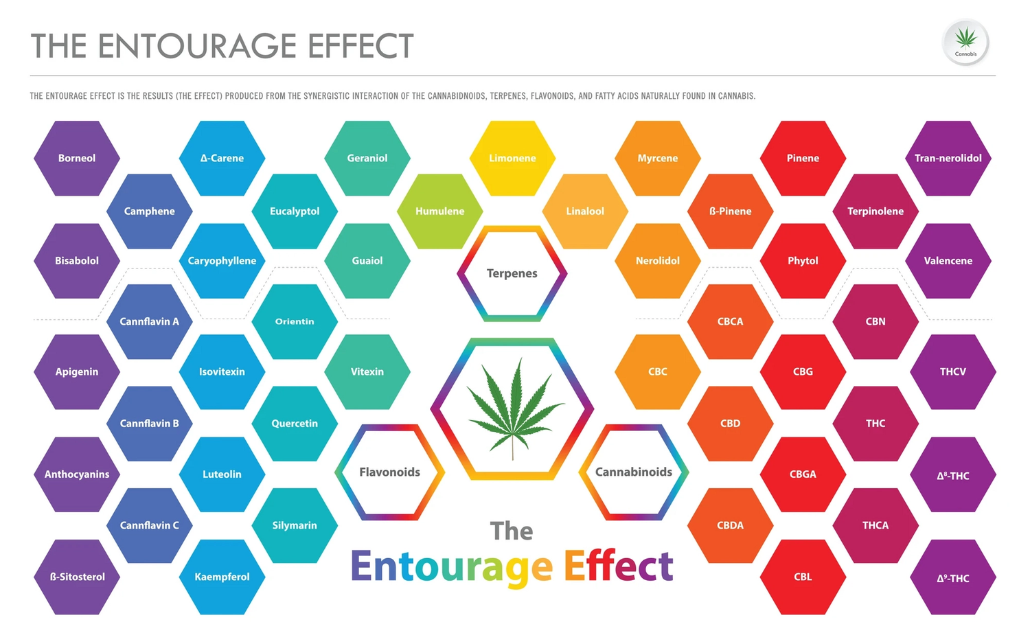 The Entourage Effect; How Does It Work?