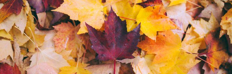 5 Amazing Fall Sales Contests [PDF]