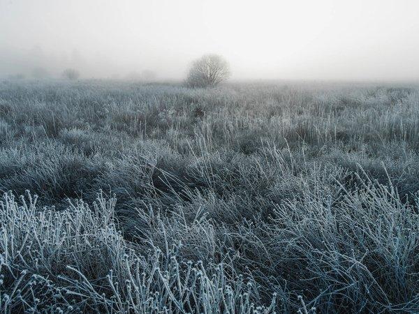 Frozen Field | Art Lasovsky