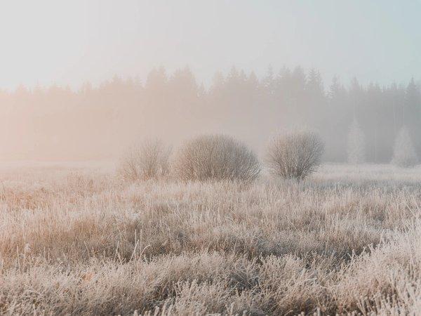 Rose Morning | Art Lasovsky