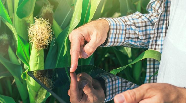 Como utilizar un producto fitosanitario como parte de la Géstion Integrada de las Plagas (GIP)