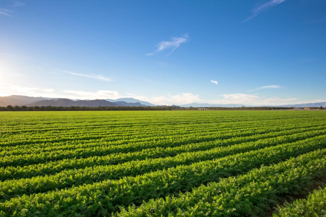 3 Sustainability Benefits of a Plant Based Diet