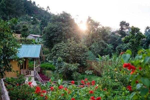 Gorilla Safari Lodge and Surrounds
