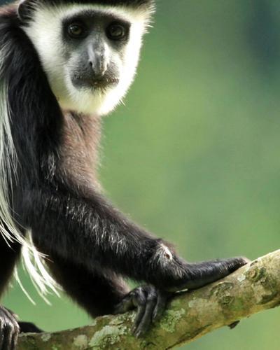 Seven-Day Gorillas, Primates and Wildlife