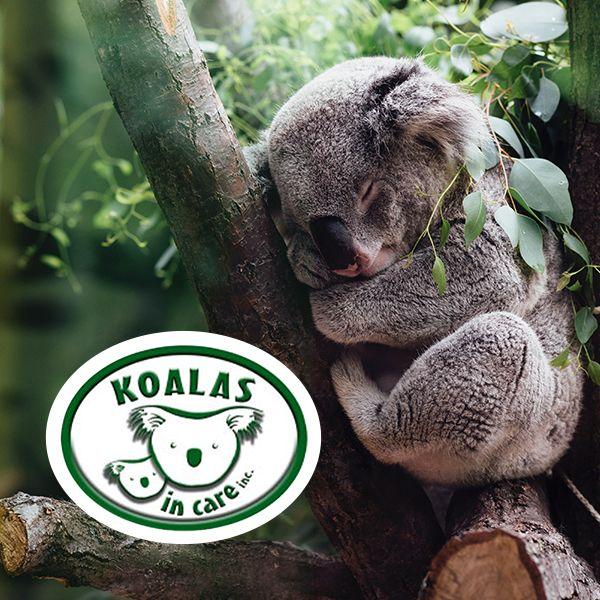 Koalas In Care