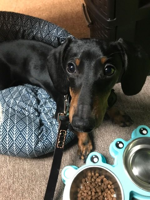 New to the Team: Dobby!