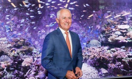 'Wasteful stunt': Turnbull government accused of doing too little to save reef