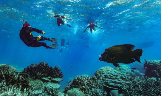 """Environment is our economy"": Tourism wakes up to a reef in peril"