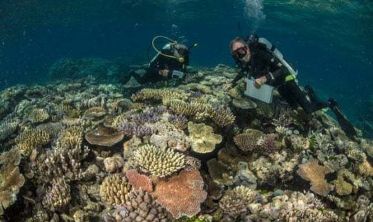 Scientists say most diverse coral site ever seen on Great Barrier Reef discovered