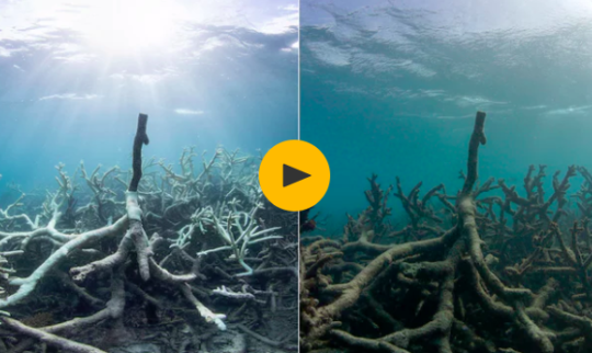 'It's a Depressing Sight': Climate Change Unleashes Ghostly Death on Great Barrier Reef
