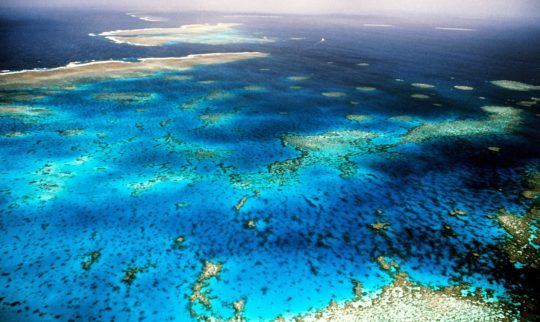 There's still time to save the Great Barrier Reef from dying