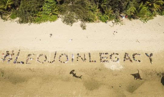 Port Douglas Sends Reef Message to Leonardo Dicaprio in Viral Video