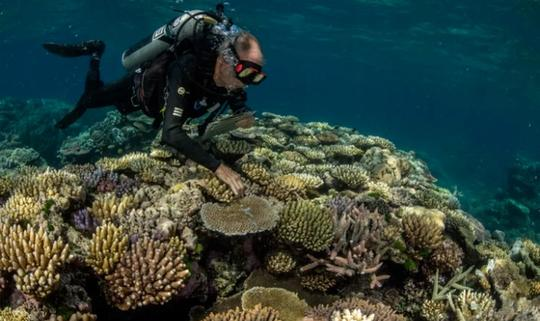 'Coral ark' bids to save biodiversity as global threats to reefs mount