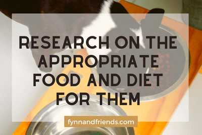 wResearch on the appropriate food and diet for them with boston terrier eating in background