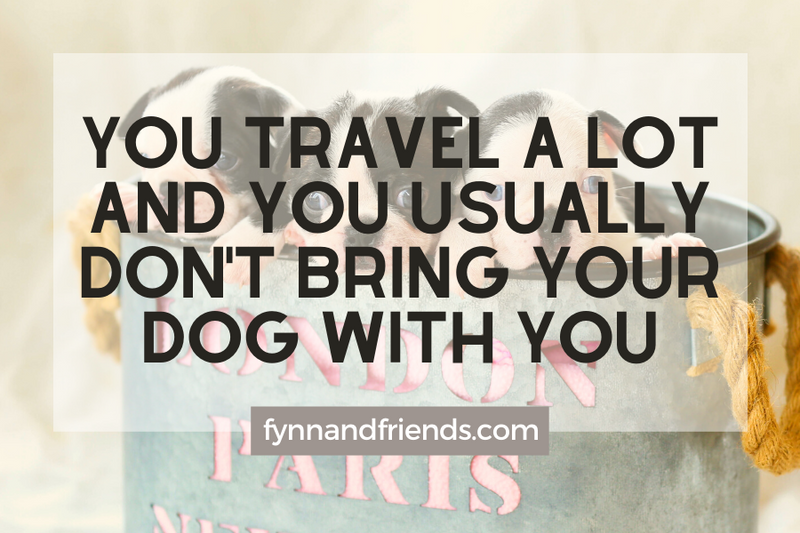 Why you should not but Boston Terrier: You travel a lot and you usually don't bring your dog with you