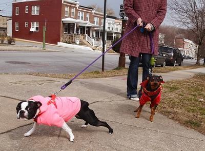 on leash walking
