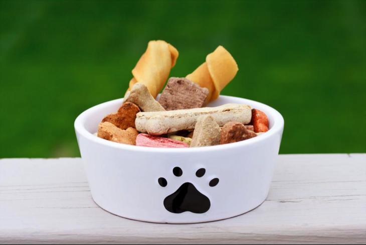 boston terrier food